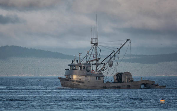 Photograph - Qualicum Producer by Randy Hall