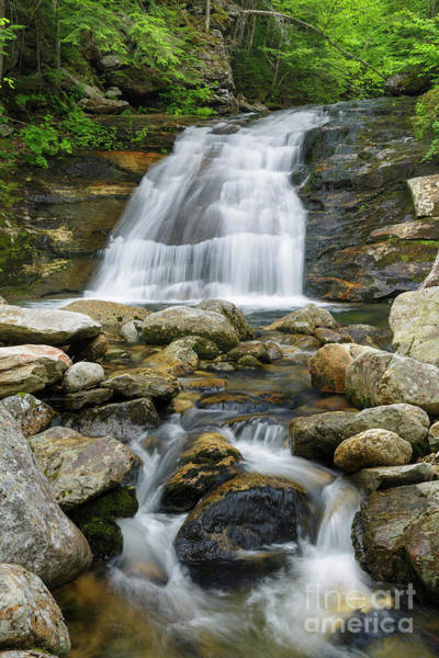 Photograph - Quarta Cascade - Randolph, New Hampshire by Erin Paul Donovan
