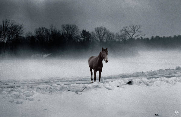 Photograph - Quarter Horse In The Mist by Wayne King