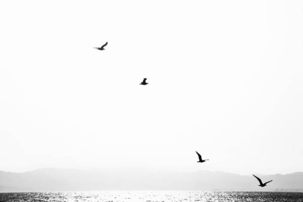 Sea Bird Photograph - Quartet by Hayato Matsumoto