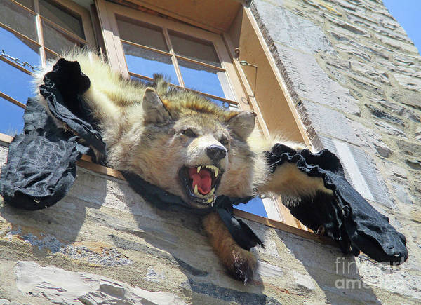 Timberwolves Photograph - Quebec City Detail 19 by Randall Weidner