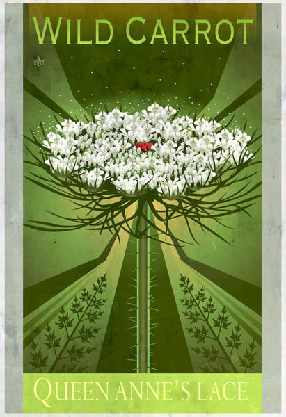 Lace Painting - Queen Anne's Lace Floral Poster by Garth Glazier
