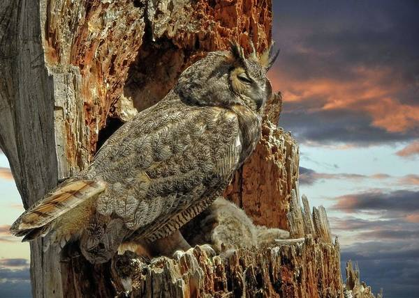 Photograph - Queen Of Owls by Dawn Key
