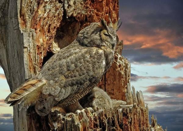 Wall Art - Photograph - Queen Of Owls by Dawn Key