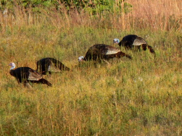 Photograph - Quick Hide It's Thanksgiving by Wild Thing