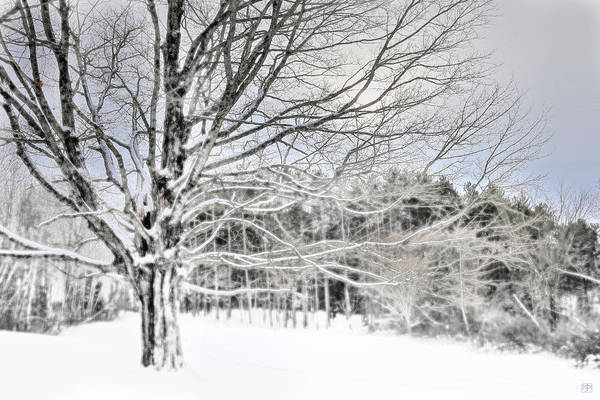 Photograph - Quiet And Cold by John Meader