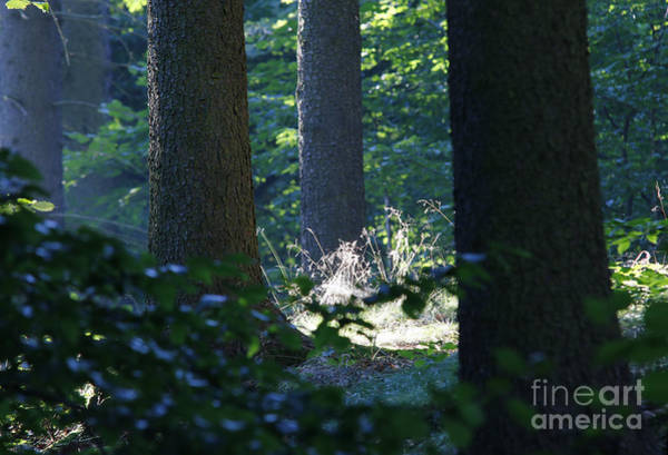 Wall Art - Photograph - Quiet And Peaceful Place In The Forest by Michal Boubin