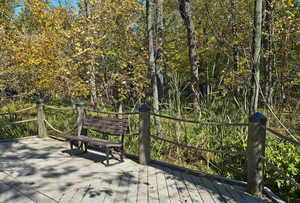 Roosevelt Island Wall Art - Photograph - Quiet Bench On Theodore Roosevelt Island by Brendan Reals