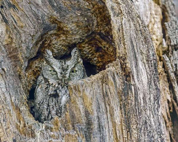 Photograph - Quiet Screech by Tony Beck