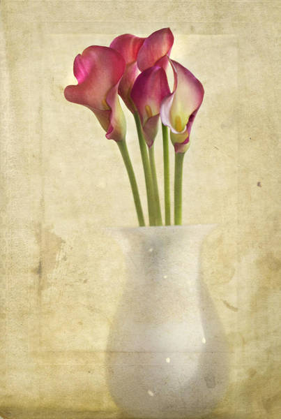 Pink Lily Photograph - Quietly by Rebecca Cozart