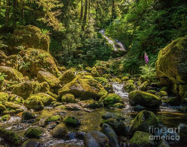 Wall Art - Photograph - Quinault Rain Forest by Michael Tidwell