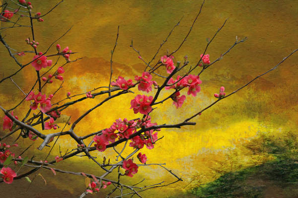 Quince Photograph - Quince And Spring In The Mountains by Jeff Burgess