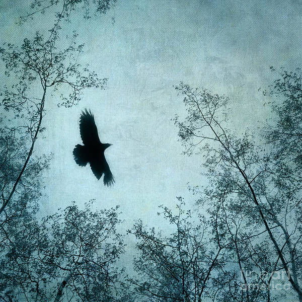 Canopy Photograph - Spread Your Wings by Priska Wettstein
