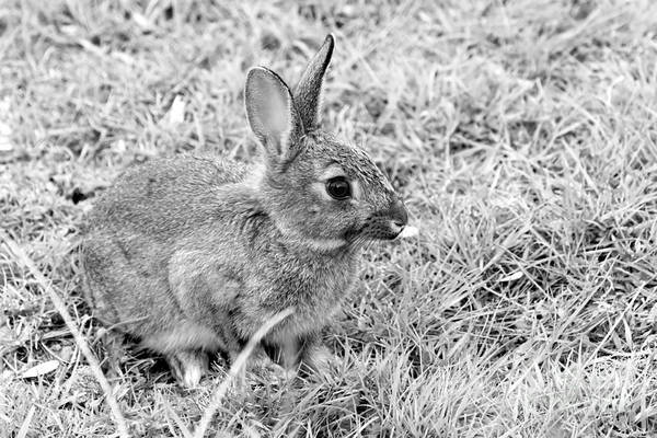Wall Art - Photograph - Rabbit by Louise Heusinkveld