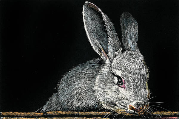 Drawing - Rabbit by William Underwood