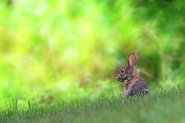Photograph - Rabbit Zen by Bill Wakeley