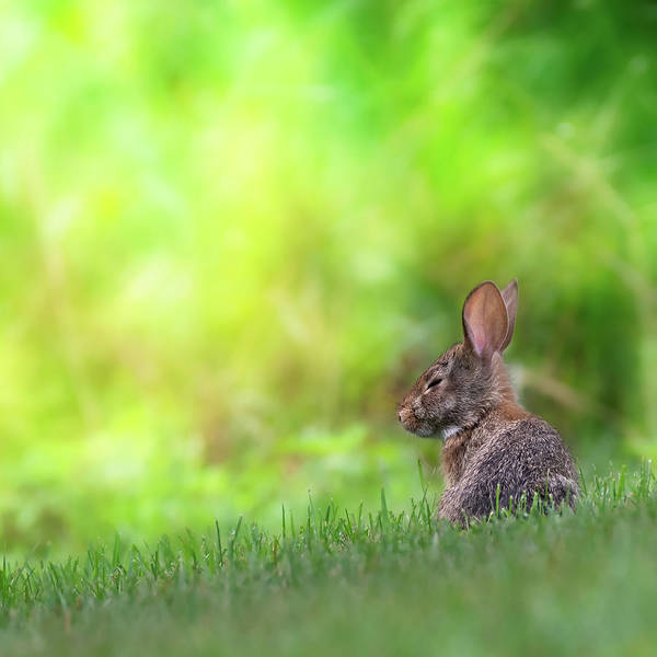 Photograph - Rabbit Zen Square by Bill Wakeley