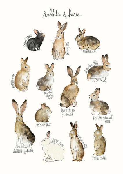 Bunny Rabbit Wall Art - Painting - Rabbits And Hares by Amy Hamilton