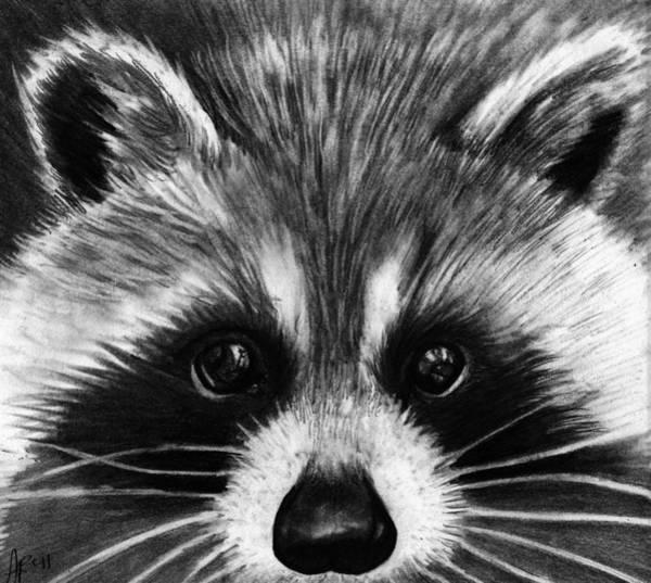 Wall Art - Drawing - Raccoon by Alycia Ryan