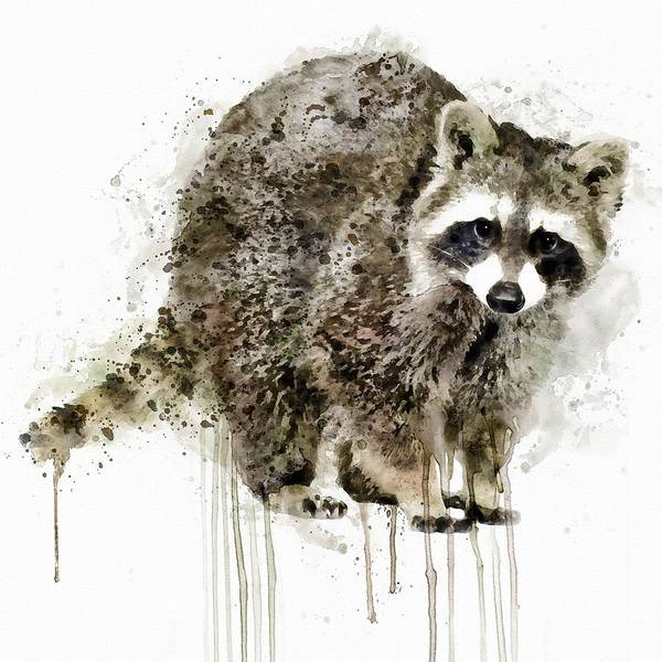 North American Wildlife Wall Art - Painting - Raccoon by Marian Voicu