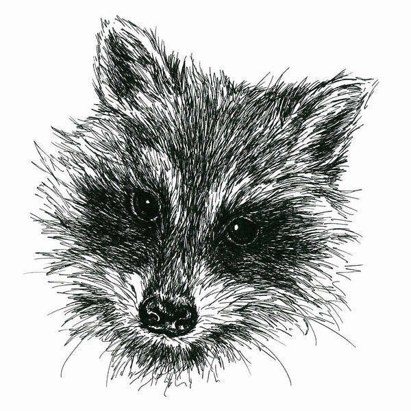 Drawing - Raccoon Portrait In Ink by MM Anderson