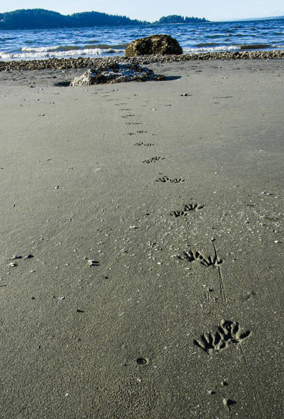 Raccoon Photograph - Raccoon Tracks by Pelo Blanco Photo