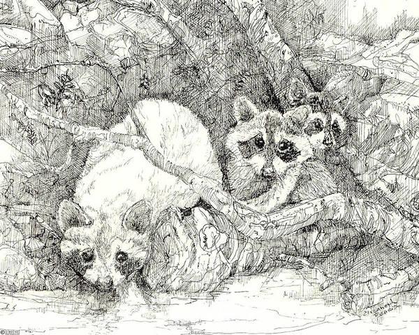 Drawing - Raccoons 1980 by Lizi Beard-Ward