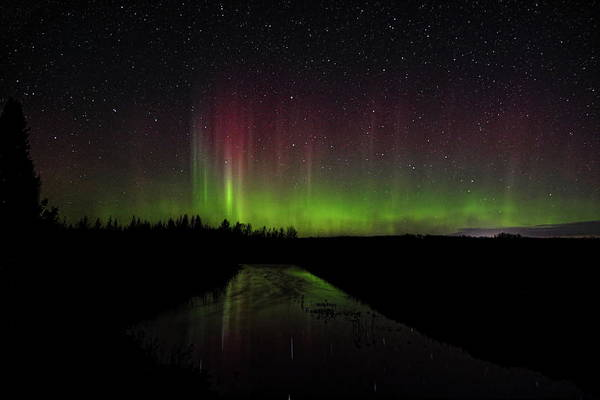 Photograph - Red And Green Aurora Pillars by Dale Kauzlaric