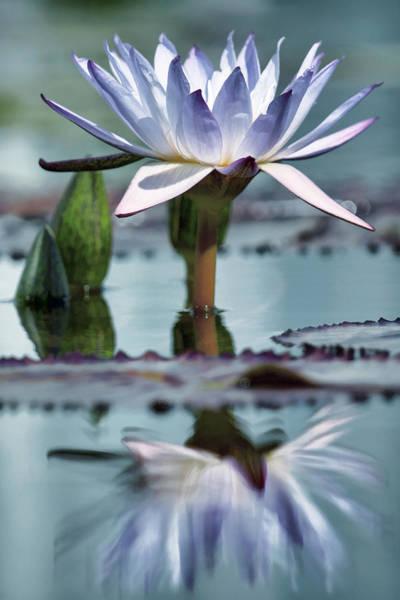 Photograph - Radiance Reflected Blue Tone by Leda Robertson