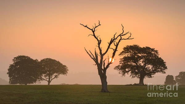 Wall Art - Photograph - Radiant Past New Forest Sunrise by Richard Thomas