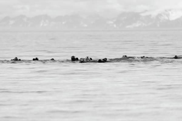 Raft Of Otters Art Print