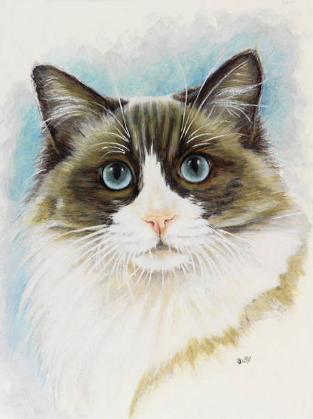 Painting - Ragdoll Portrait In Watercolor by Barbara Keith