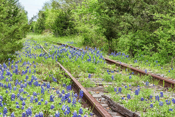 Photograph - Rails And Bluebonnets 1 by Victor Culpepper