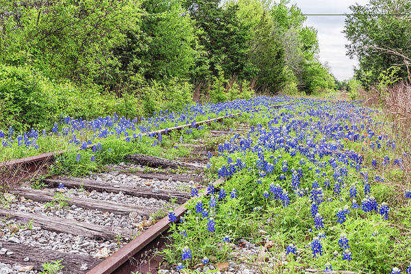 Photograph - Rails And Bluebonnets 3 by Victor Culpepper