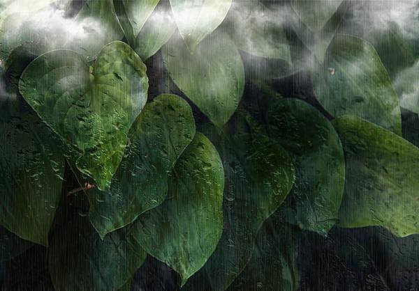 Photograph - Rain And Fog Caressing Leaves by Phyllis Meinke
