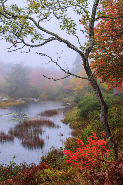 Acadia National Park Wall Art - Photograph - Rain by Chad Dutson