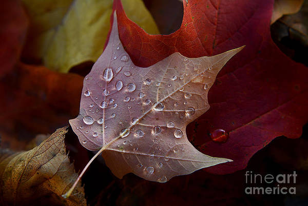 Photograph - Rain Droplets On Leaf by Steve Somerville