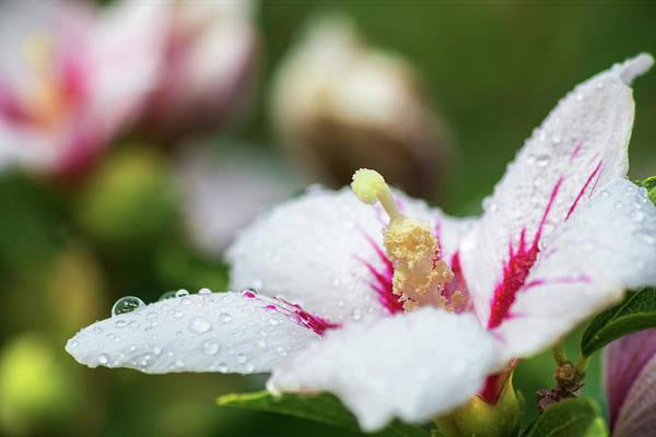 Photograph - Rain Drops  by Brian Hale