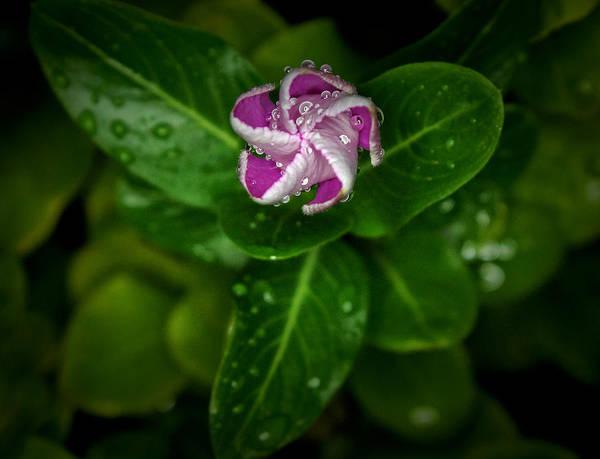 Photograph - Rain Drops by Elaine Malott