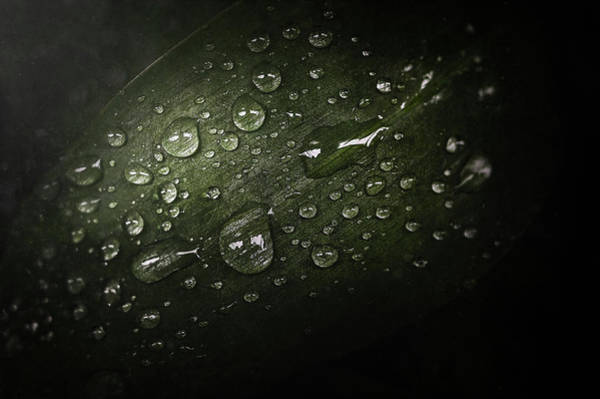 Waterdrop Photograph - Rain Drops On Leaf by Scott Norris