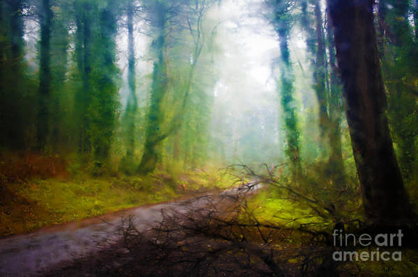 Humid Photograph - Rain Forest by Carlos Caetano