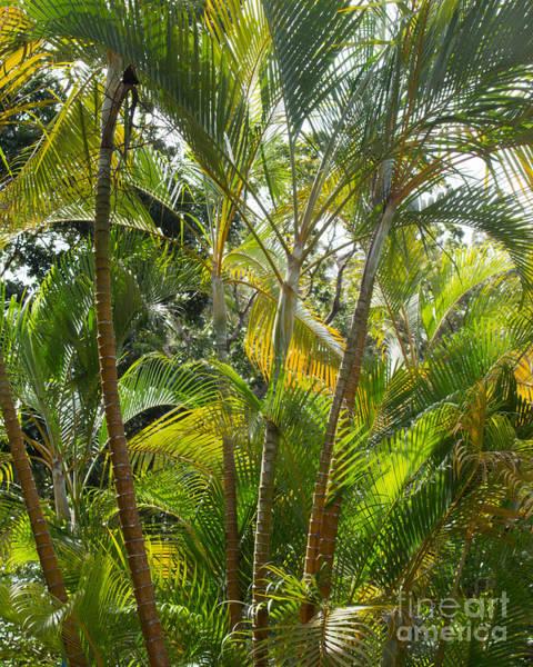El Toro Photograph - Rain Forest by Cheryl Del Toro