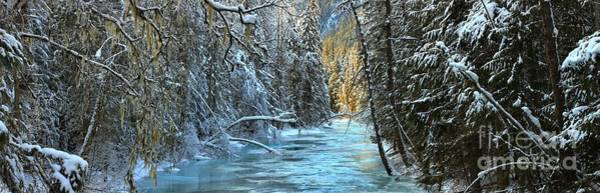 Photograph - Rain Forest Winter by Adam Jewell