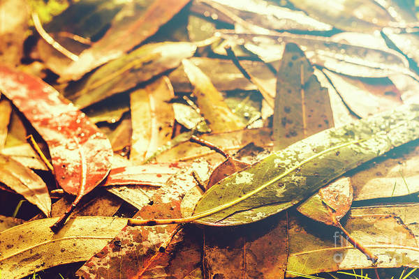 Sun Down Wall Art - Photograph - Rain In Fall by Jorgo Photography - Wall Art Gallery