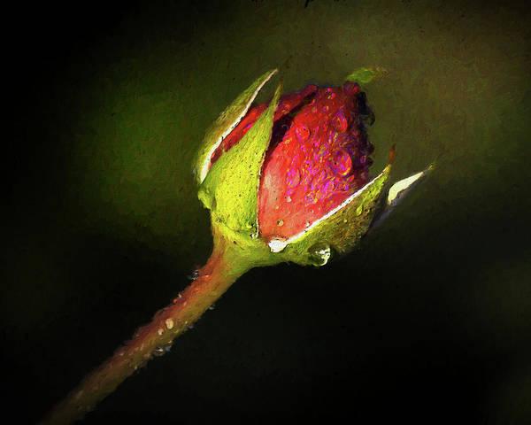 Photograph - Rain Kissed Rosebud by Jerry Gammon