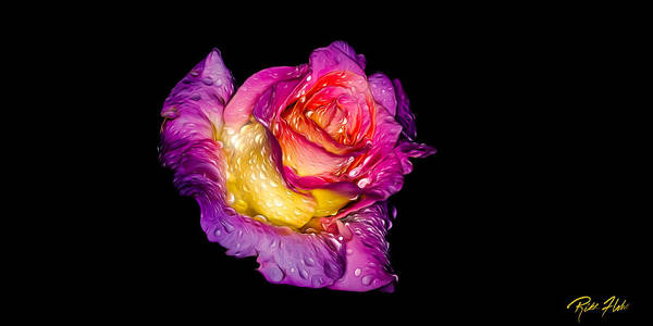 Photograph - Rain-melted Rose by Rikk Flohr