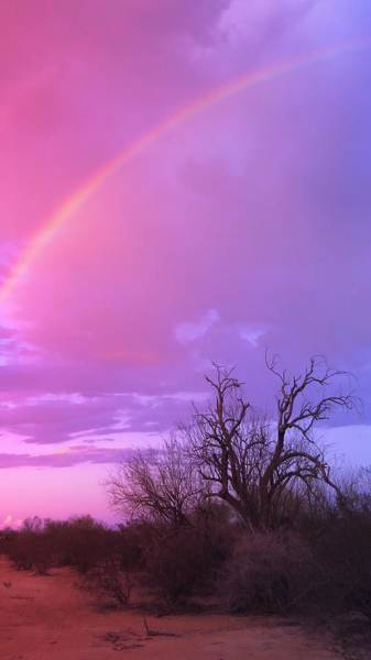 Photograph - Rainbow And Ironwood by Judy Kennedy