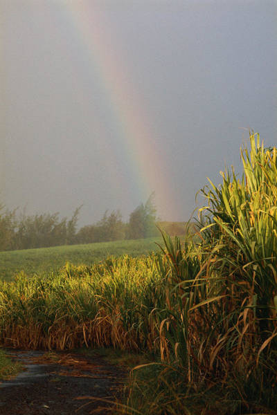 Wall Art - Photograph - Rainbow Arching Into Field Behind Stream by Stockbyte