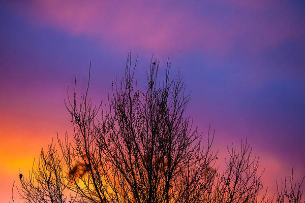Shrubs Photograph - Rainbow Clouds by Az Jackson