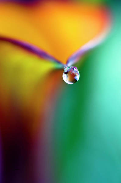 Digital Art - Rainbow Drop by Crystal Wightman
